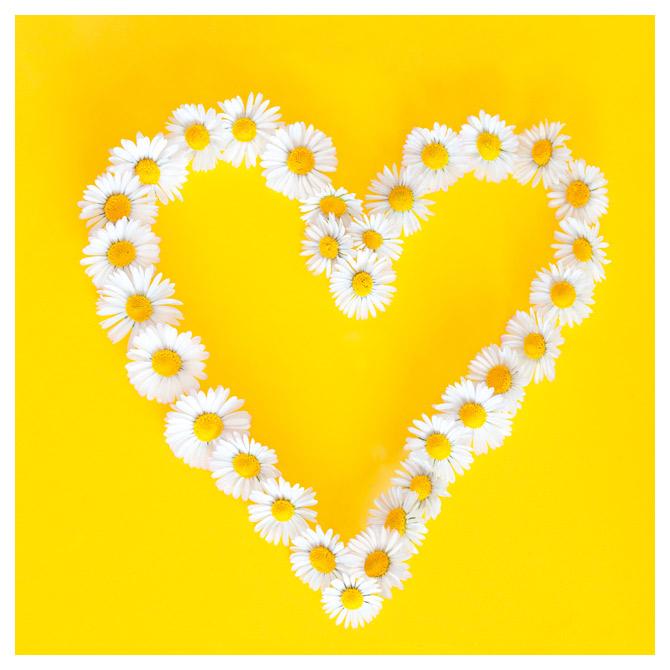 Salvete troslojne 33x33cm pk20 Daisies in love Herlitz 11309622!!